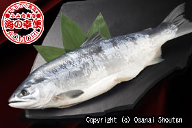 本ちゃん紅鮭